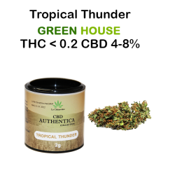 TROPICAL THUNDER - AUTHENTICA